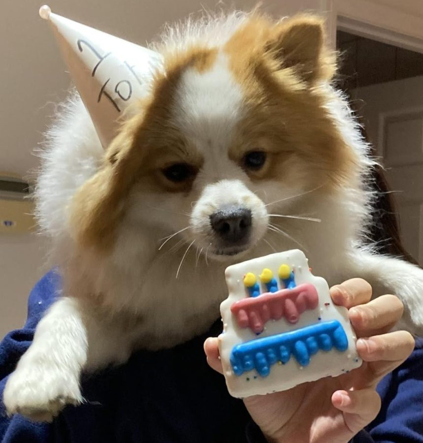Katelyn Lees puppy, Tofu , turns one year old
